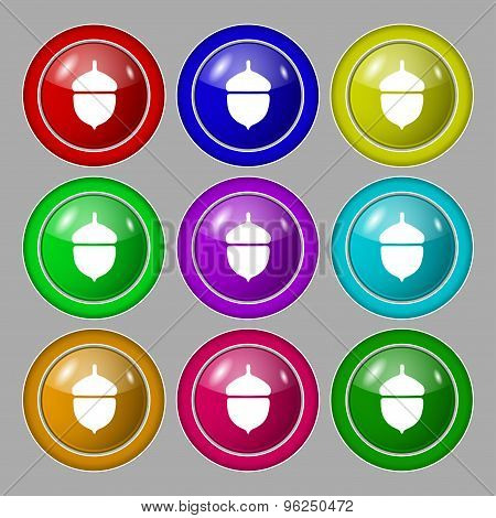 Acorn Icon Sign. Symbol On Nine Round Colourful Buttons. Vector