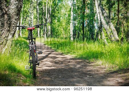 Mountain Bike On A Road In The Woods