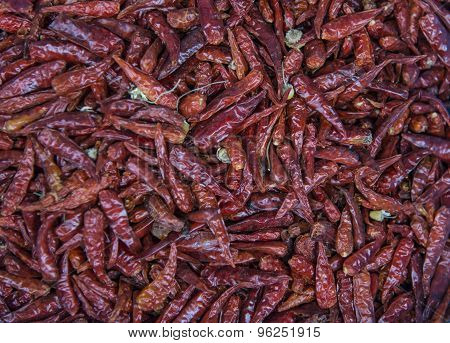 Red hot chilly peper