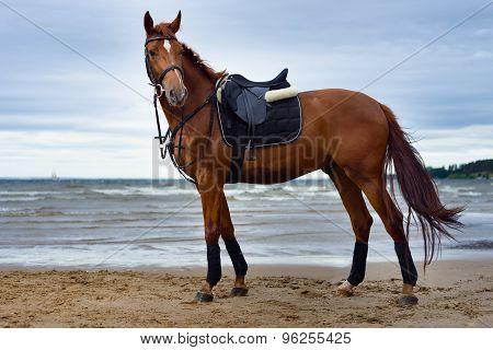 horse on the coast