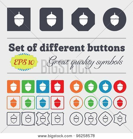 Acorn Icon Sign. Big Set Of Colorful, Diverse, High-quality Buttons. Vector