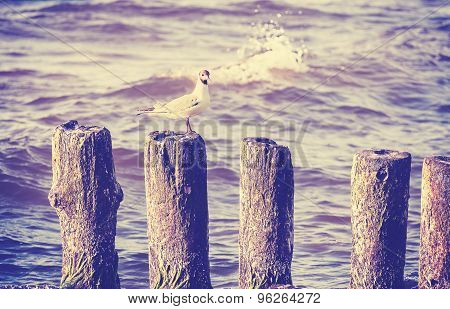 Retro Vintage Photo Of Seagull On Wooden Posts.