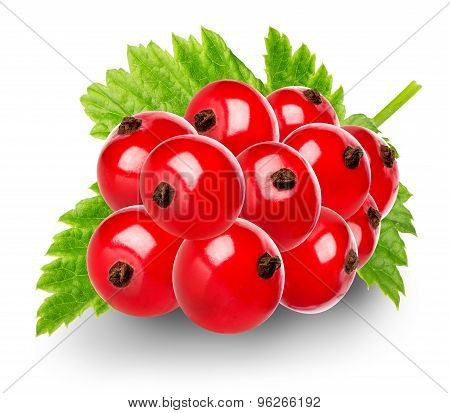 Red berries of currant