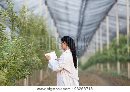 Woman Agronomist In The Orchard