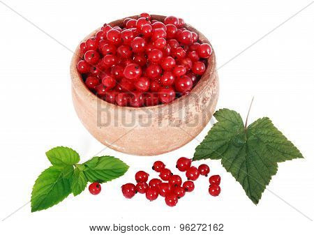 Red currants in a pot