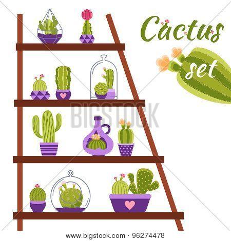 Cactus Shelf Illustration