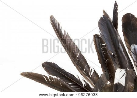Dishevelled Birds' Feathers In Various Shades Of Grey