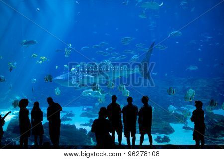 anonymous crowd look at fish through glass at large aquarium