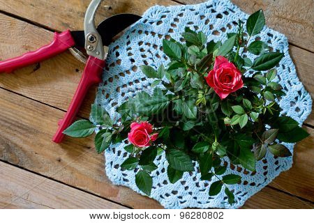 Roses On Blue Knitted Napkin And Garden Shears
