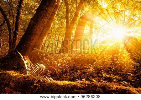 Sunny Autumn Scenery In The Forest