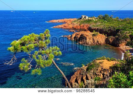 Esterel, Tree, Rocks Beach Coast And Sea. Cote Azur, Provence, France.