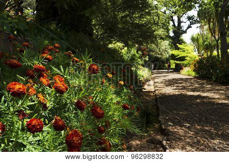 The Tropical Botanical Garden in Funchal, Madeira island, Portugal