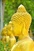 picture of buddhist  - Buddha Statue in the Buddhist Temple in Thailand - JPG