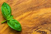 picture of basil leaves  - Aromatic spice - JPG