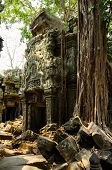 stock photo of raider  - Ta Prohm - JPG