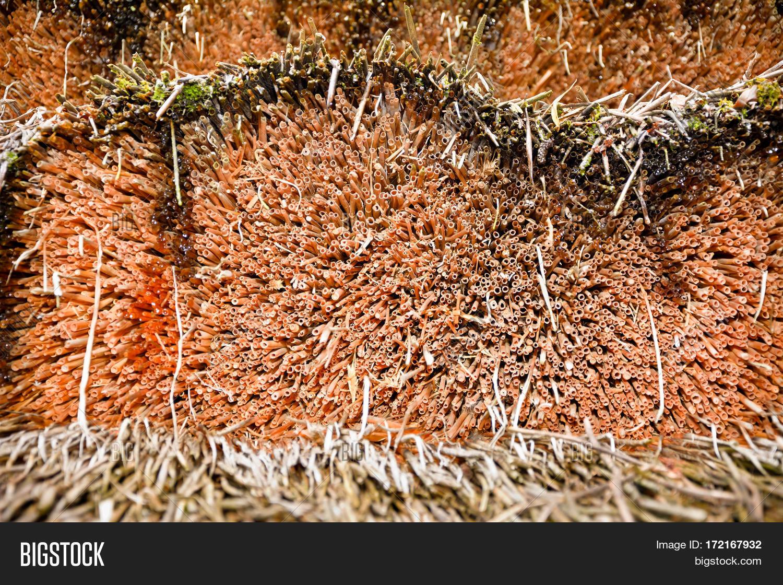 Tiki Hut Roof Clip Art Strohdach Stockbild Bild Von Foto