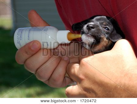 Bottle Fed Puppy
