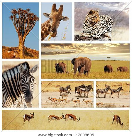 collage de safari en África