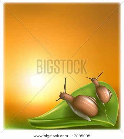 snail on the green leaf against the background of the sunset picture shows a clean environment
