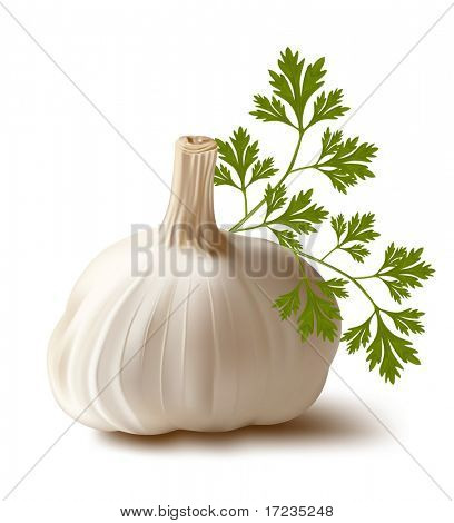 Vector. Garlic with parsley.