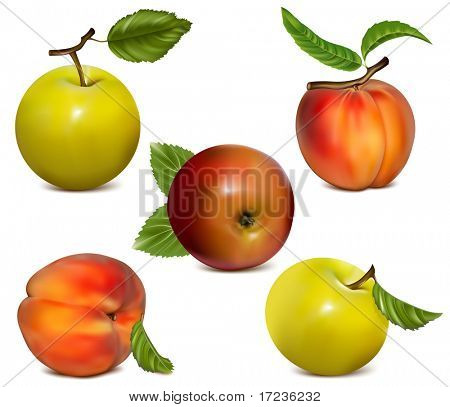 Vector set of apples and ripe peaches.