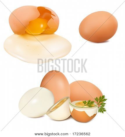 Photo-realistic vector of egg.