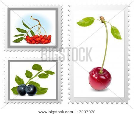 Vector. Postage stamps. Berries.