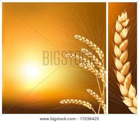 Vektor. Ohren des Weizens auf die steigende Sonne-Hintergrund.