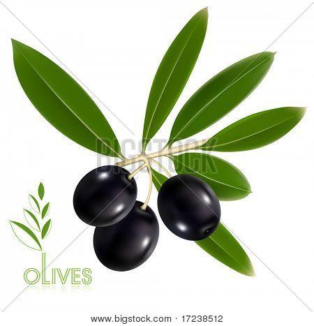 Fotorealistische Vektor-Illustration. Schwarze Oliven mit Blättern.