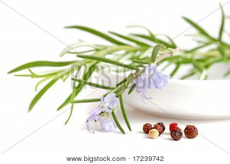 Rosemary herb with pepper