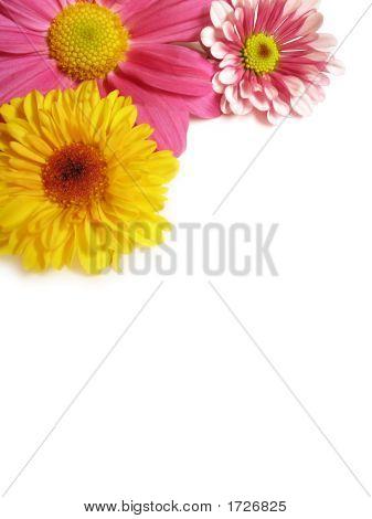 Flower Corner - 2