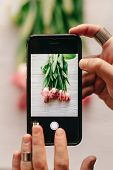 Hand Holding Phone Taking Photo Of Stylish Flower Flat Lay, Pink Tulips On White Wooden Rustic Backg poster
