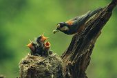 stock photo of bird-nest  - birds - JPG