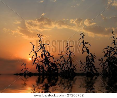Plans in water with sunset reflection