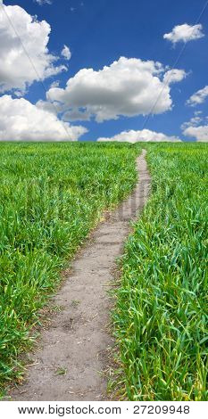 path across green field in nice day