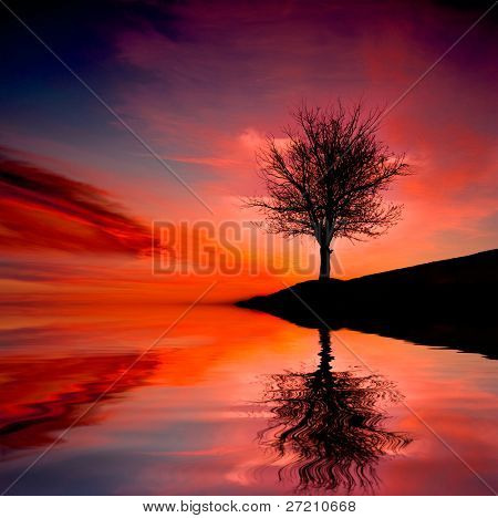 Leafless tree near lake on sunset background sky