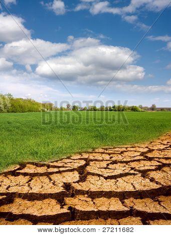 leafless part ground ingressive on green field