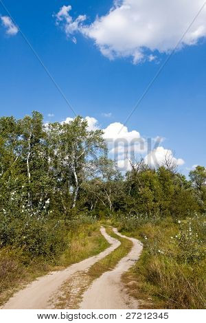Rut road in forest in nice day