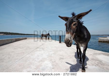 Two Donkeys On The Wharf