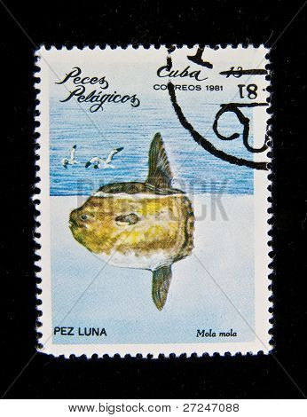 CUBA - CIRCA 1981: A stamp printed in the Cuba shows fish Pez Luna (Mola mola), circa 1981
