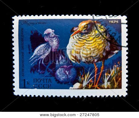 USSR- CIRCA 1975: A stamp printed in the USSR shows Turuthan (ruff, reeve) bird , circa 1975.