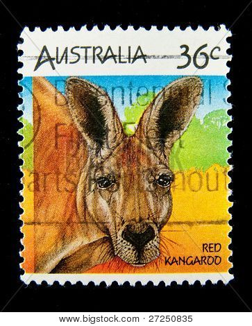 AUSTRALIA - CIRCA 1990s: A stamp printed in Australia shows image of a red kangaroo, circa 1990s