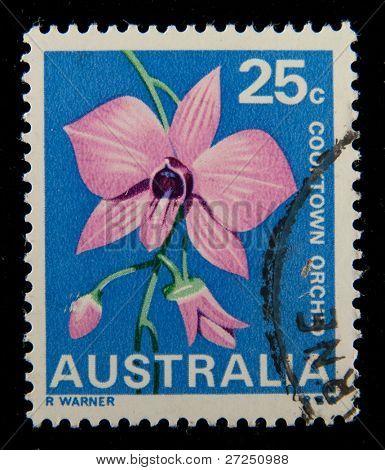 AUSTRALIA - CIRCA 2005: Un sello impreso en espectáculos de Australia Cooktown orquídea, alrededor del año 2005