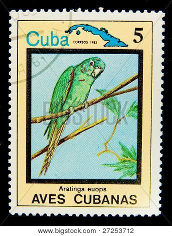 CUBA - CIRCA 1983: A stamp printed in Cuba shows bird Aratinga euops, circa 1983