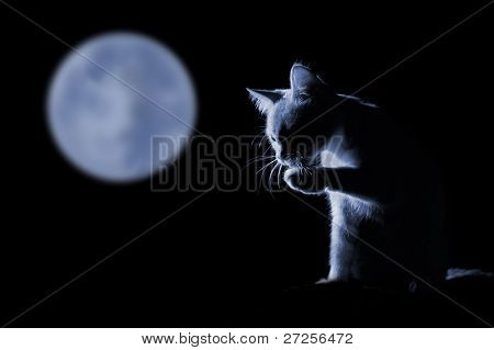 cat against moonlit night background