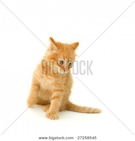kitten cute red attack isolated on white background
