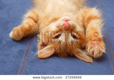 kitten lying on the back like a log