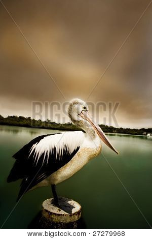 pelican standing on a jetty