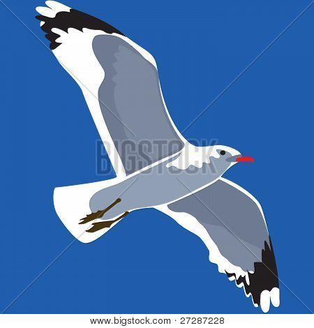 Gull against the sky, vector illustration