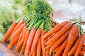 Carrots. Fresh Organic Carrots. Fresh Garden Carrots. Bunch Of Fresh Organic Carrots At Market. poster